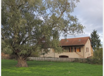 Village house not far from Cluny, nearly two acres